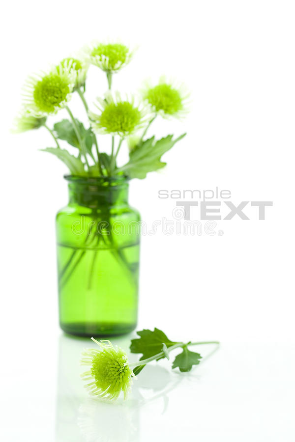Download Flowers stock image. Image of nature, green, close, botanical - 10401127