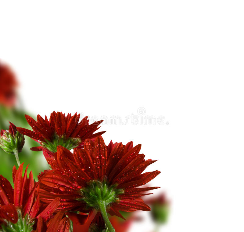 Free Flowers Stock Images - 11269144
