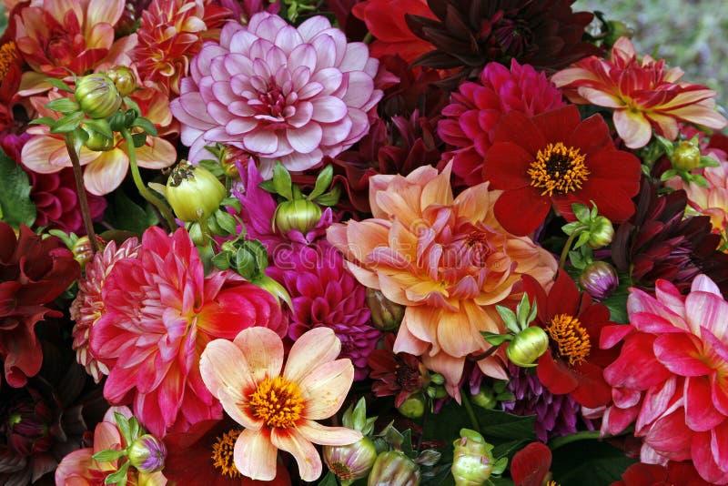 Download Flowers stock photo. Image of bordeaux, beautiful, botanical - 11402904