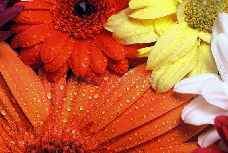 Download Flowers stock photo. Image of form, florist, color, orange - 120460