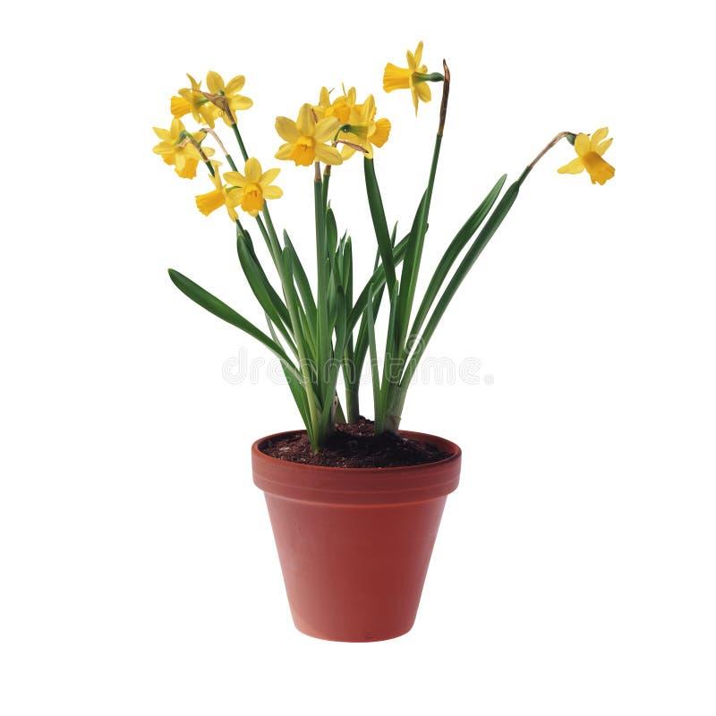 Free Flowers Stock Image - 12729411