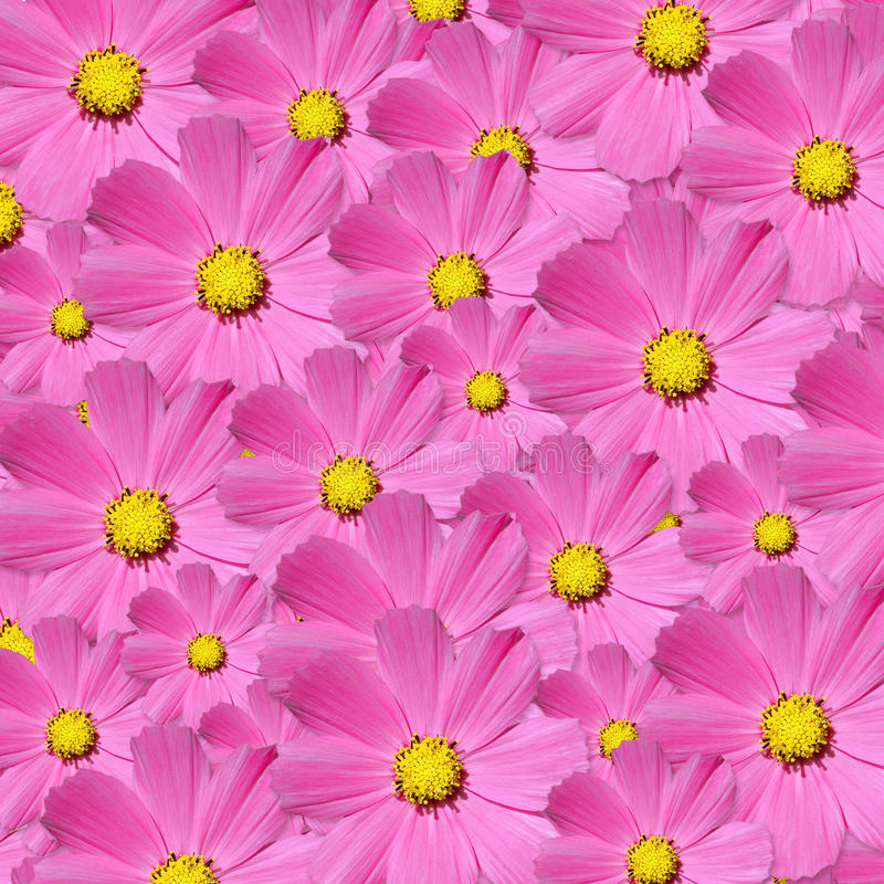 Download Flowers Royalty Free Stock Image - Image: 12953716