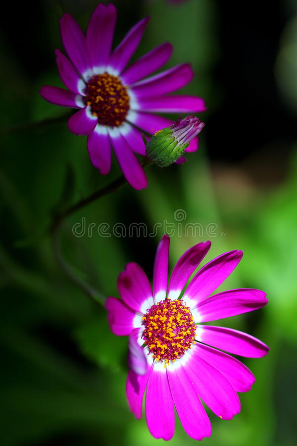 Flowers. Two flowers in the garden royalty free stock photography