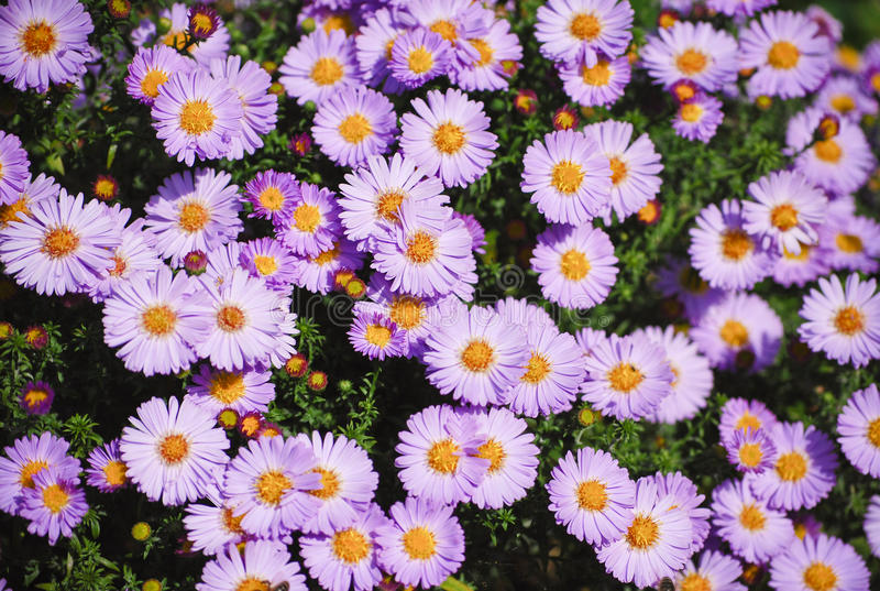 Download Flowers stock image. Image of plants, bloom, nature, field - 14854867