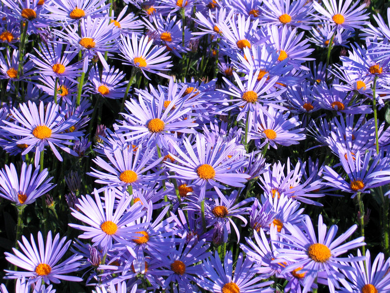 Download Flowers stock image. Image of beautiful, purple, colors - 161871