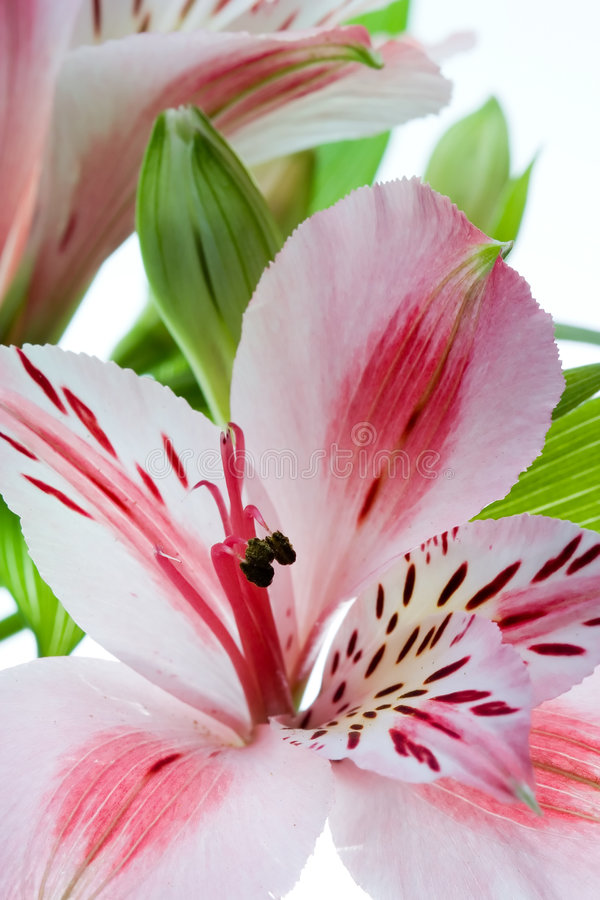 Free Flowers Royalty Free Stock Image - 1640916
