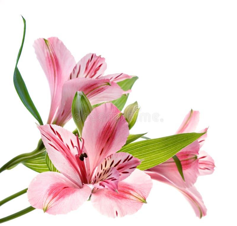 Free Flowers Stock Photos - 1640943