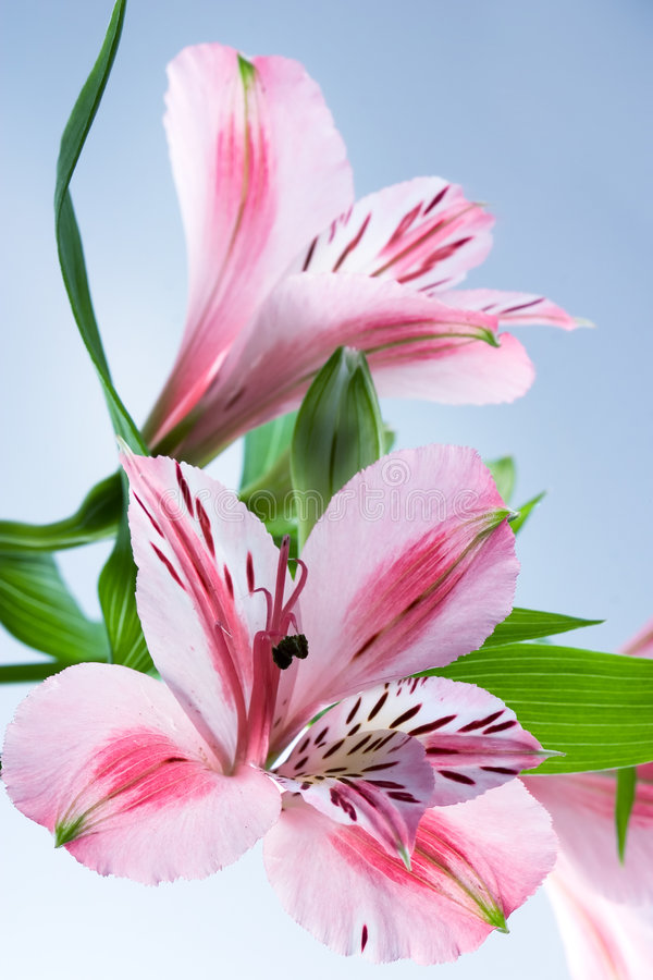 Free Flowers Stock Image - 1641011