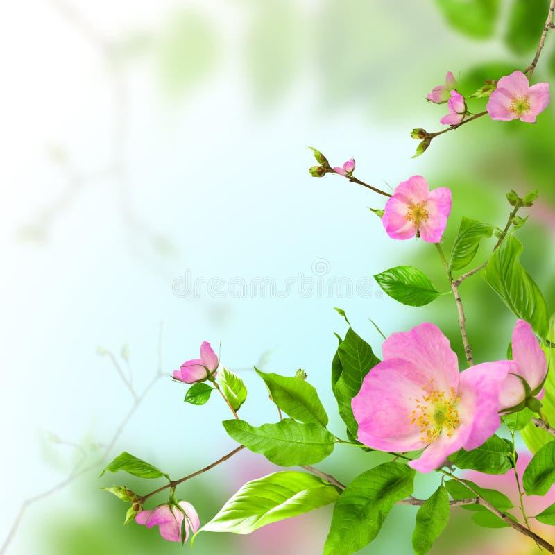 Free Flowers Stock Photo - 16530660