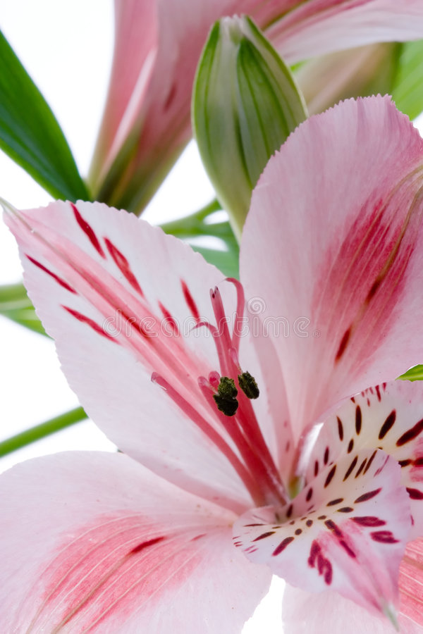 Free Flowers Royalty Free Stock Photography - 1684877