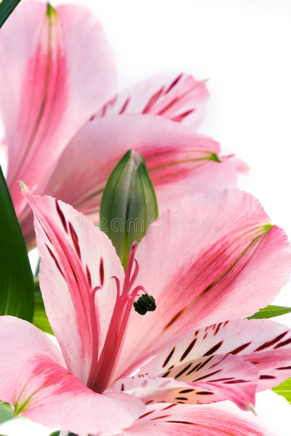 Free Flowers Stock Images - 1684904