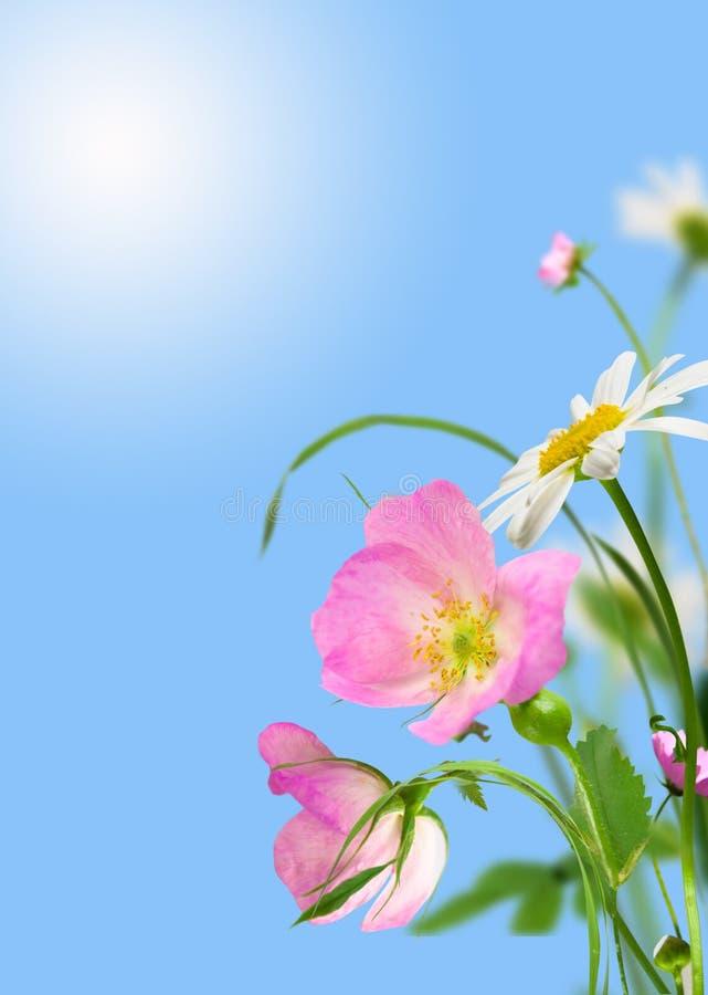 Free Flowers Stock Photo - 18377020