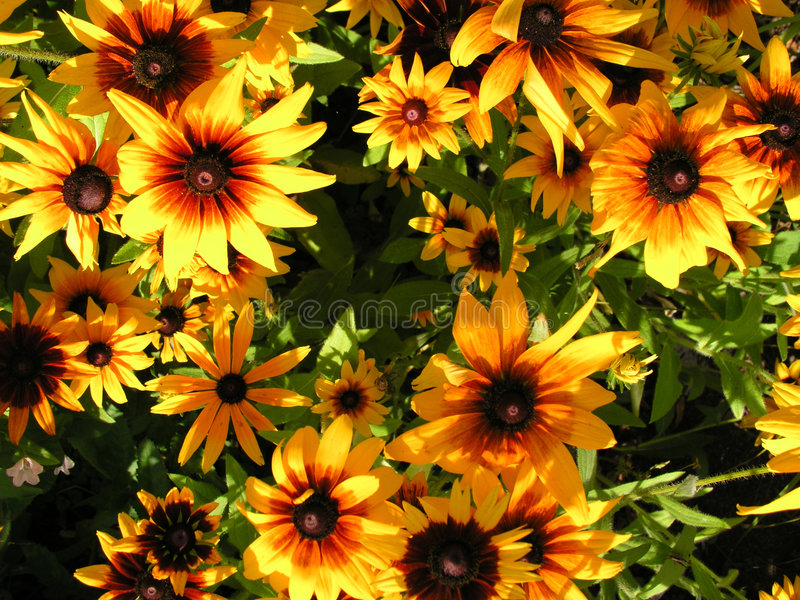 Download Flowers Stock Photos - Image: 195483