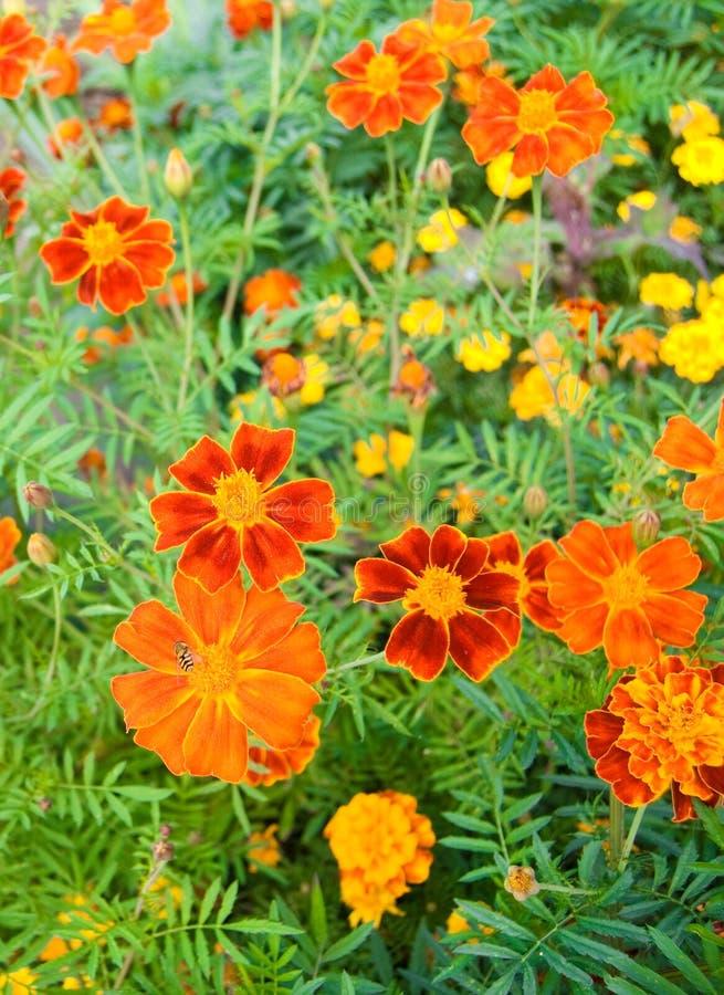 Free Flowers Royalty Free Stock Photo - 19894045