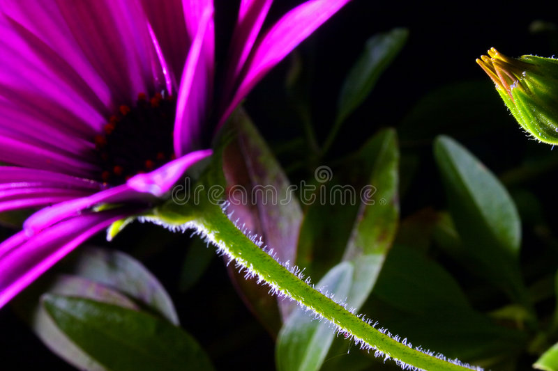 Flowers. In the night forest royalty free stock images