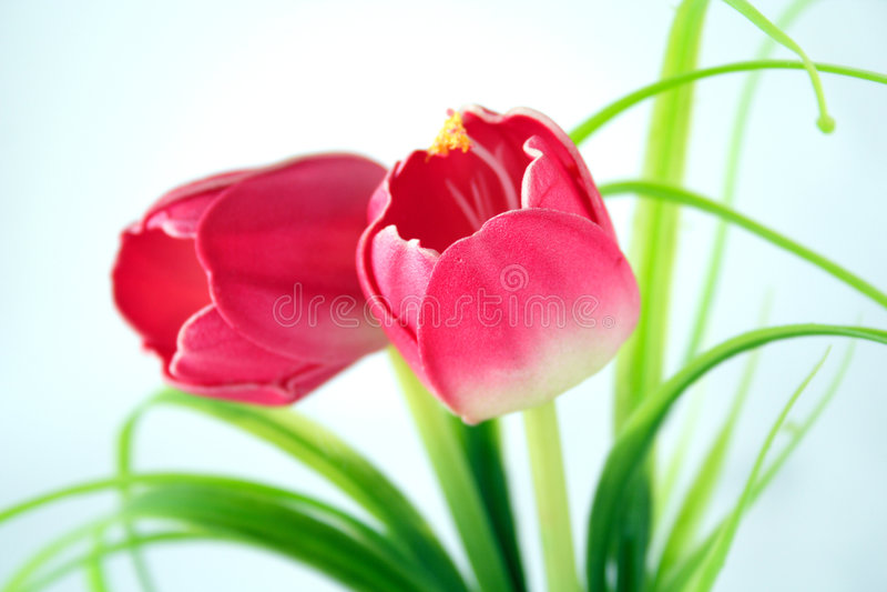 Download Flowers stock photo. Image of foliage, pattern, fresh - 2309336