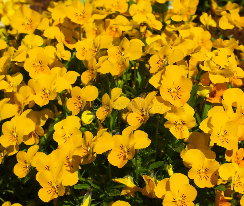 Download Flowers Stock Image - Image: 2316471