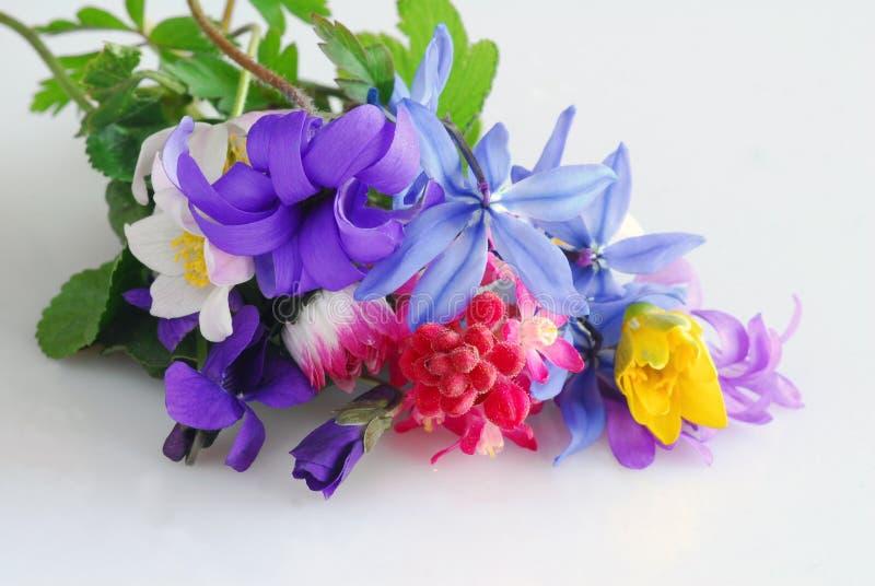 Download Flowers stock photo. Image of elegant, spring, leaves - 2324496
