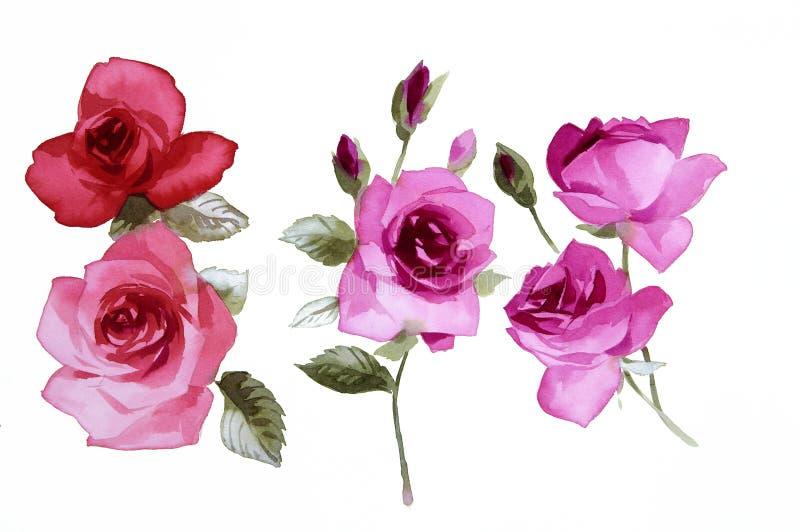 Download Flowers stock illustration. Image of flora, leaf, blossom - 23947096