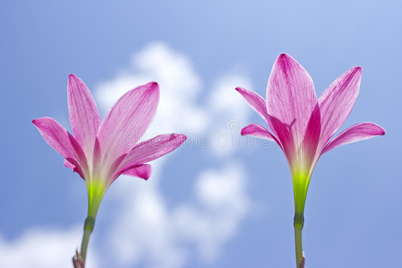 Download Flowers stock photo. Image of colorful, beauty, flora - 24749050