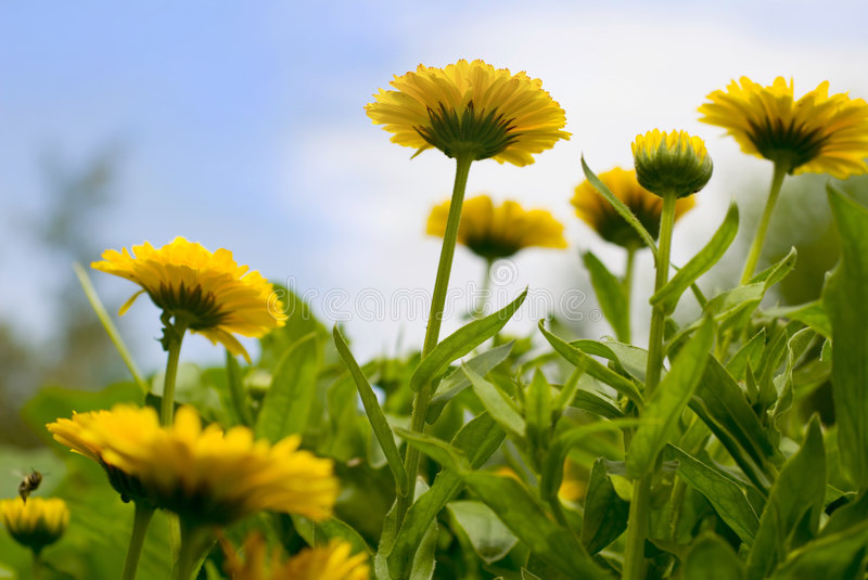Download Flowers Stock Images - Image: 2681954