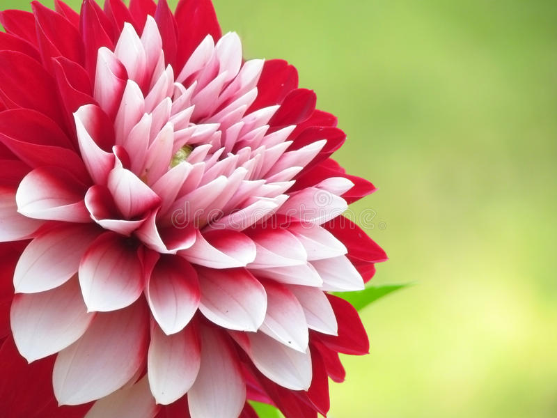 Download Flowers stock image. Image of garden, blossoming, bloom - 29123097