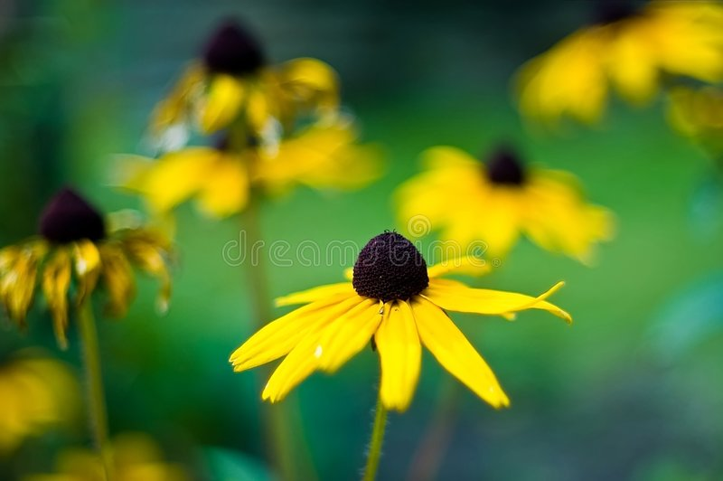 Download Flowers stock image. Image of blooms, collection, season - 4347045