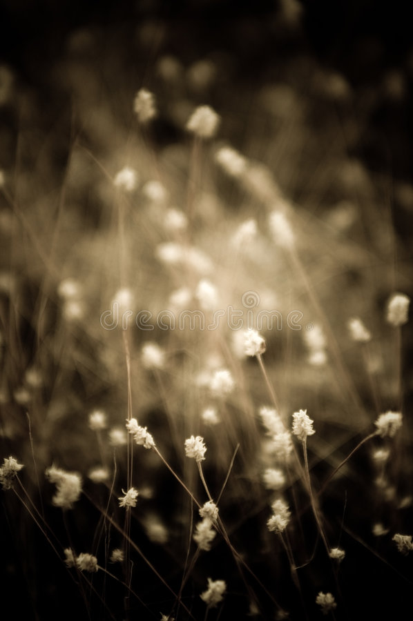 Download Flowers stock image. Image of dark, serenity, tranquility - 469493