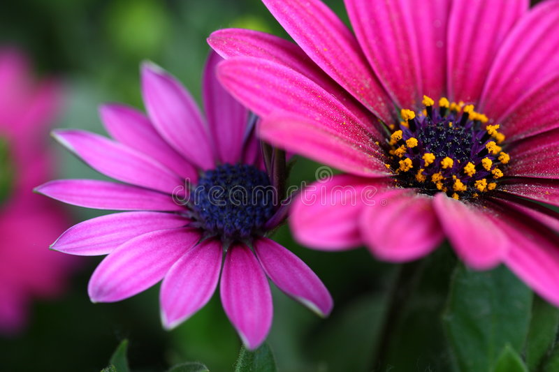 Download Flowers stock photo. Image of bloom, focus, florist, flowers - 4999702