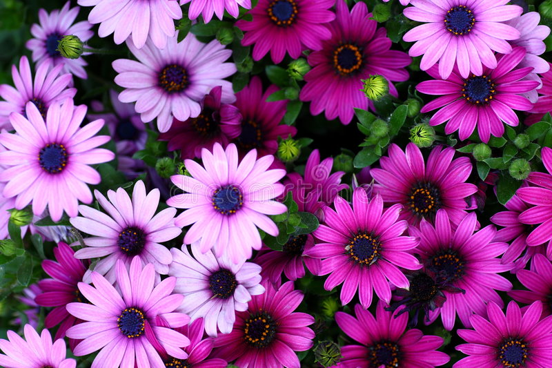 Download Flowers stock image. Image of plants, botanical, colour - 4999705