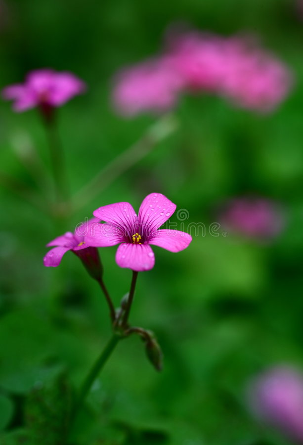 Flowers. Beautiful flowers in the garden royalty free stock images