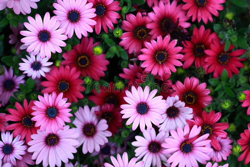 Download Flowers Royalty Free Stock Photo - Image: 5174385