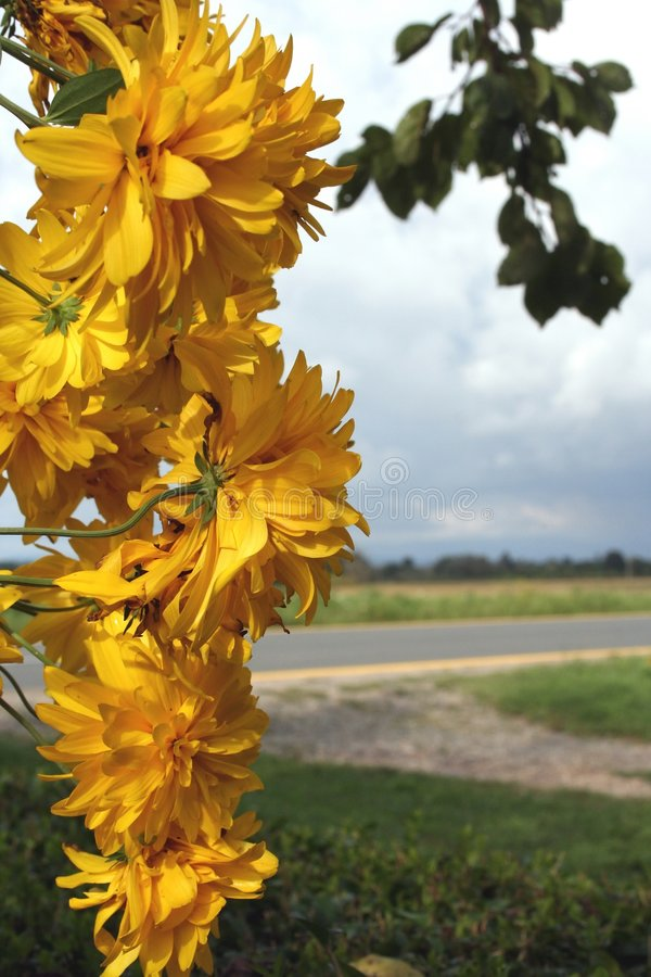 Download Flowers stock image. Image of nature, garden, health, life - 518083