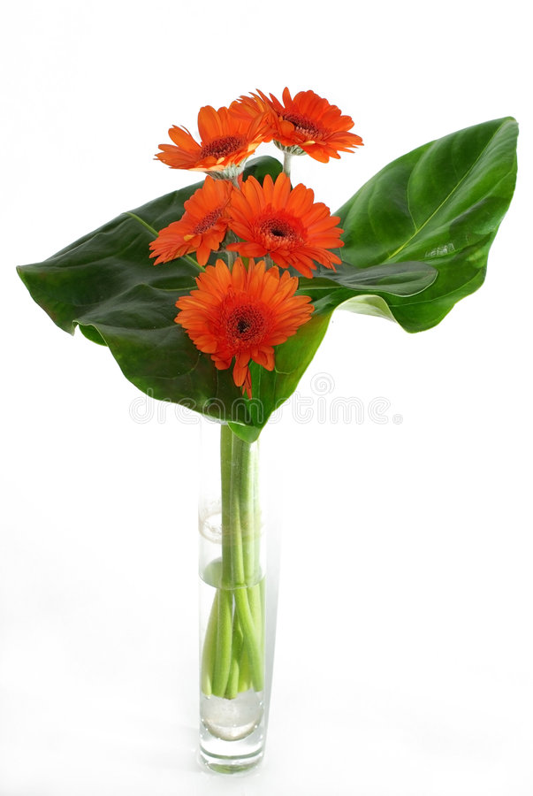 Download Flowers Royalty Free Stock Images - Image: 6974669