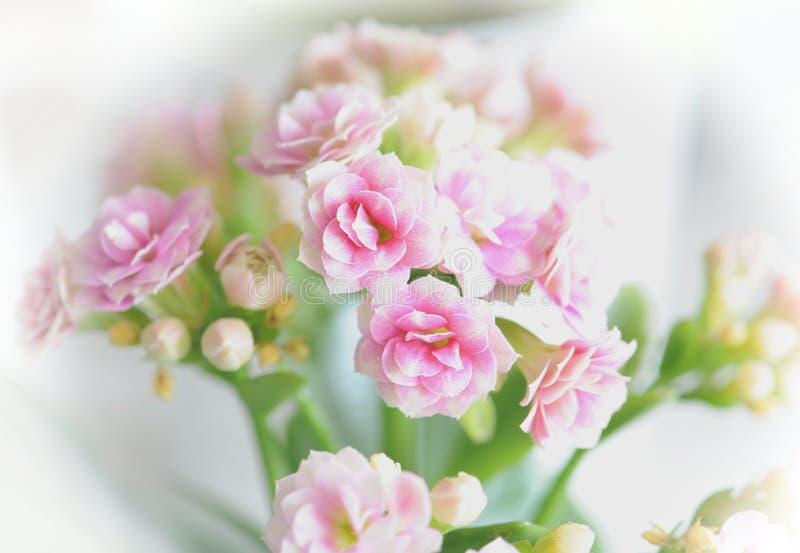 Flowers Free Public Domain Cc0 Image