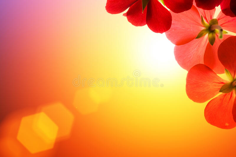 Download Flowers stock image. Image of horizontal, lens, fresh - 9455215