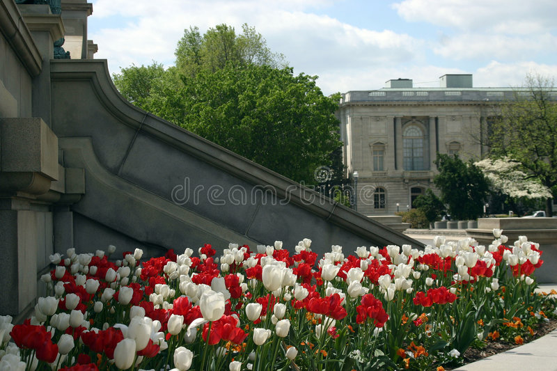 Download Flowers stock image. Image of capitol, congress, library - 975541