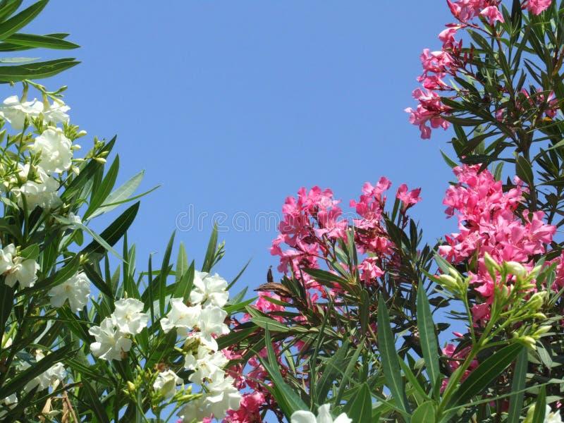 Flowers. Spring flowers stock photos