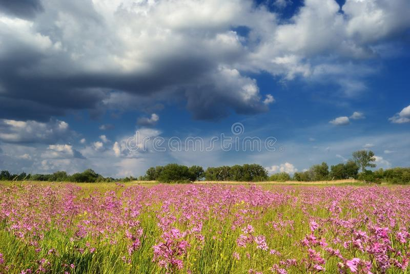 Flowers against the blue sky / summer meadow stock photography