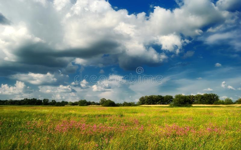 Flowers against the blue sky / summer meadow royalty free stock photography