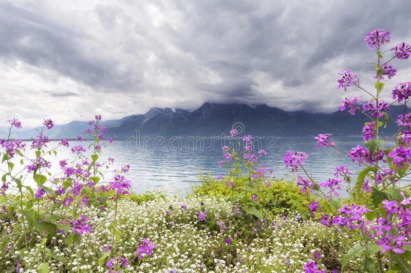 Flowers against mountains, Montreux. Switzerland royalty free stock photography