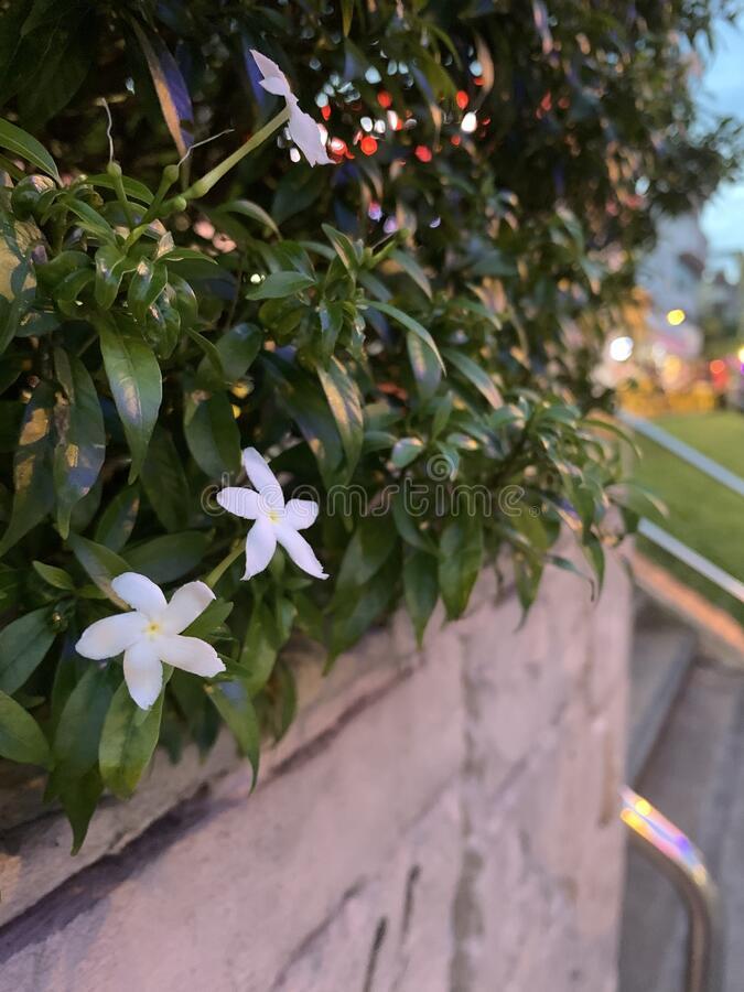 Free Flowers Along The Street Royalty Free Stock Image - 186007666