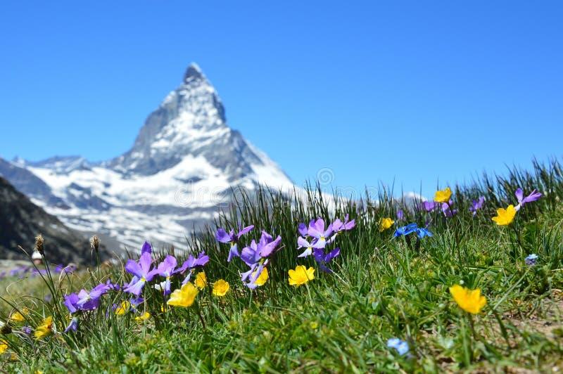 Flowers in Alpine meadow stock photo