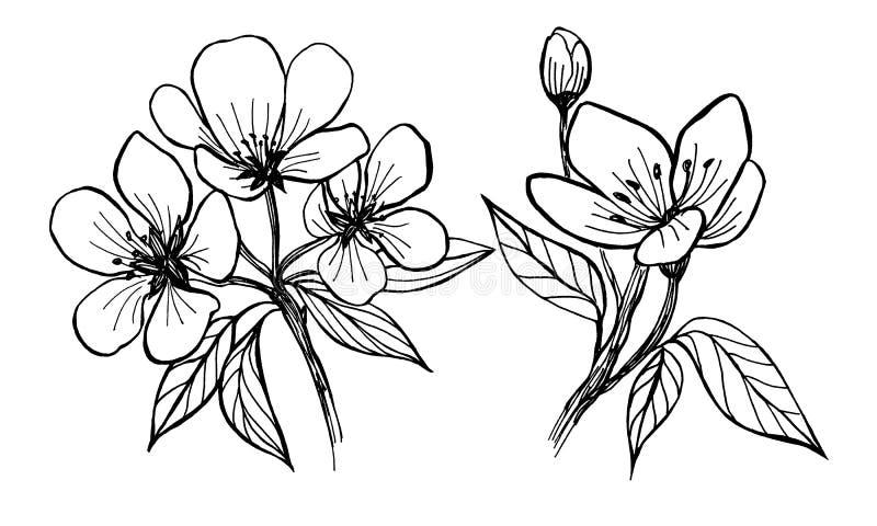 Flowers of apple tree. Manual graphics. vector illustration