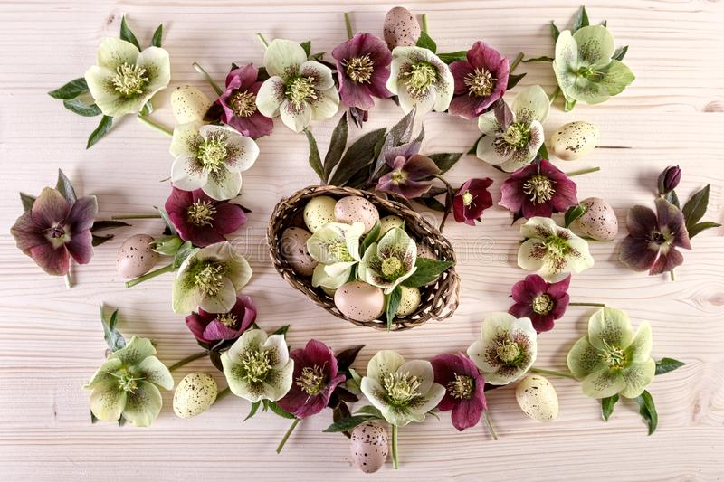 Flowers arrangement with white purple lenten roses and Easter eggs over light wood royalty free stock photo