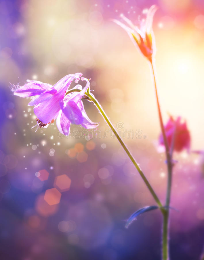 Flowers Art Design Stock Photography