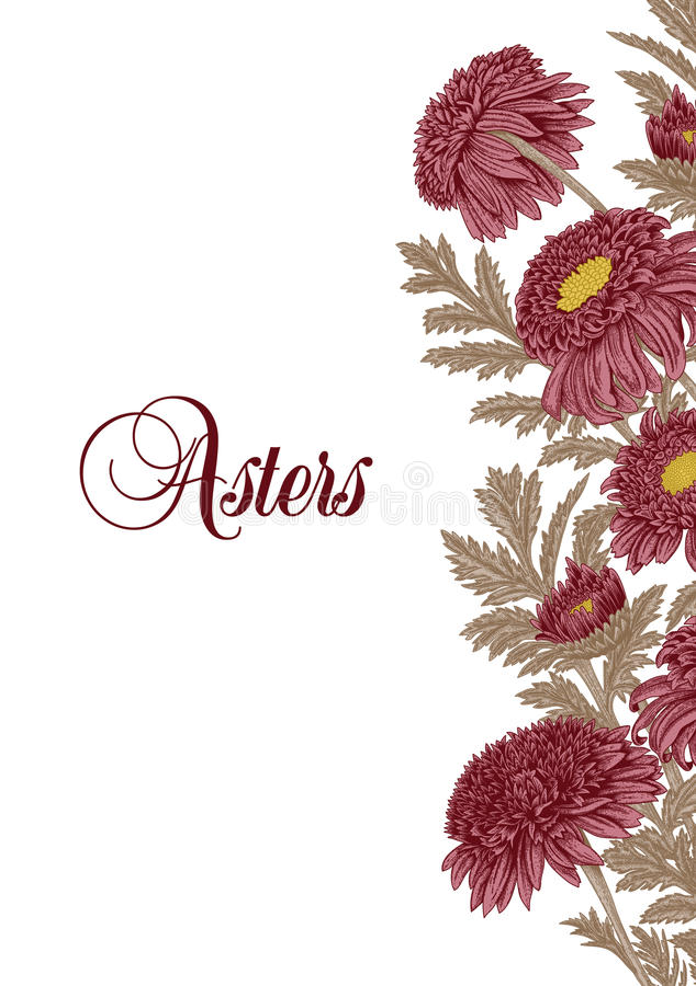 Flowers. Asters. Summer bouquet. Vector illustration in vintage style. Botany. Elegant card. stock illustration