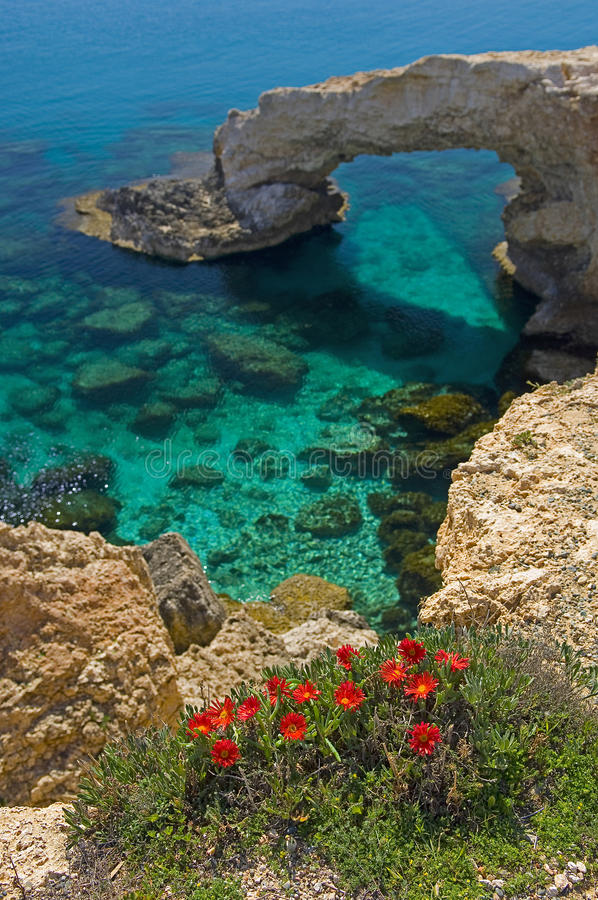 Flowers at ayia napa rock arch. A view of some red flowers in the foreground overlooking a clear blue sea with a rock arch in the background in ayia napa on the royalty free stock images