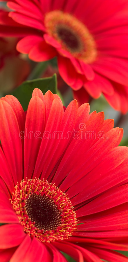 Download Flowers Background stock photo. Image of flowers, fresh - 3170796