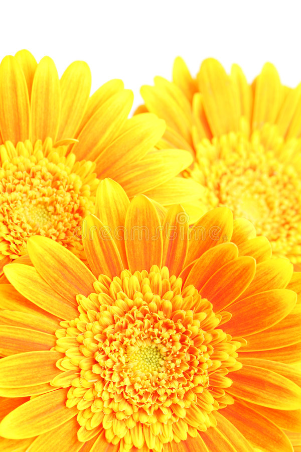 Download Flowers background stock photo. Image of vibrant, close - 5169352
